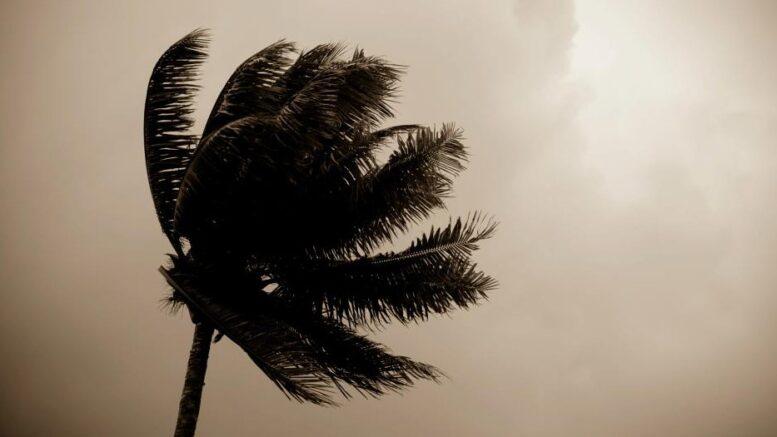 Mauritius: Palme i cyklon, oktober 2013, foto af Sandy Marie via Flickr